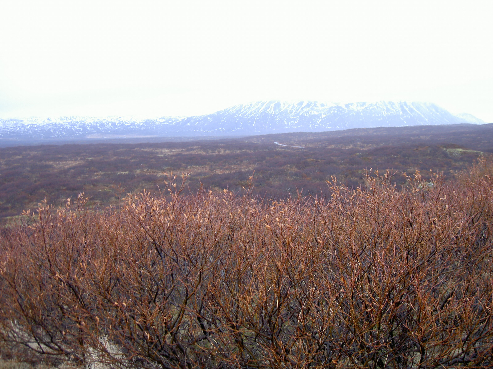 View near lake Thingvallavatn (purpose of page is to display an image)